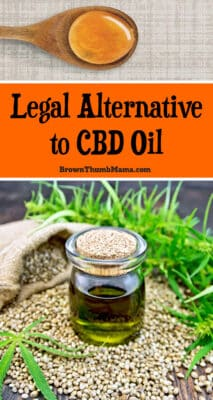 Have you considered using cannabis oil (also called CBD oil) for back pain, cancer support, or MS? There is a safe, legal alternative to CBD oil that you should consider first.