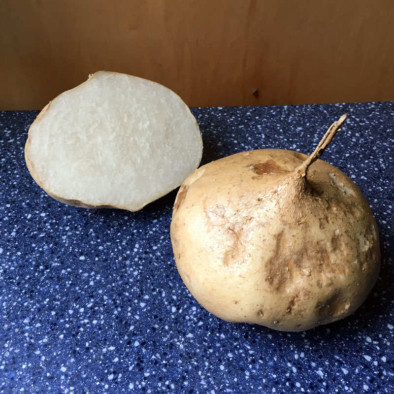 How to plant and grow jicama in your garden.