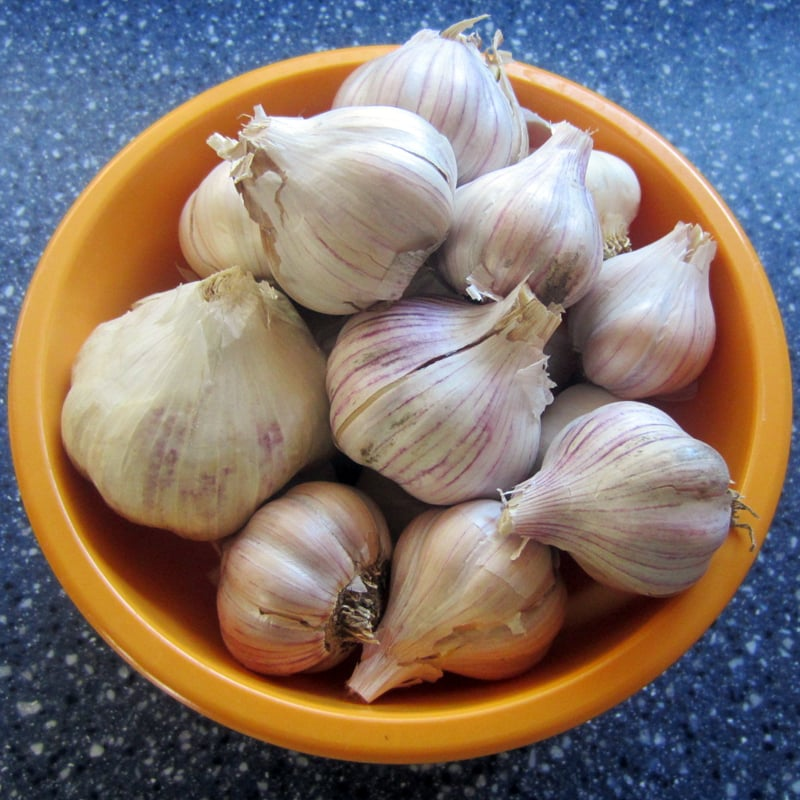 Let's not mince words here, folks: garlic is essential. Garlic is easy to grow, amazing to cook with, and can even be used to improve your health. Here's everything you need to know about growing, cooking, freezing, and staying healthy using garlic.