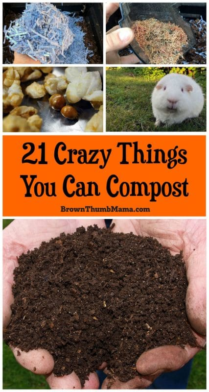 items you can put in your compost bin
