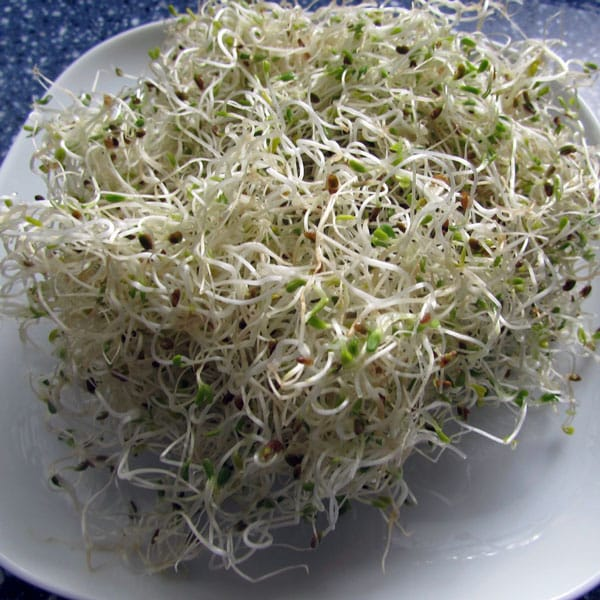 It's easy to grow sprouts indoors and you don't need any special equipment. These simple instructions will help you grow alfalfa sprouts, broccoli sprouts, mung bean sprouts, mustard sprouts, and more.