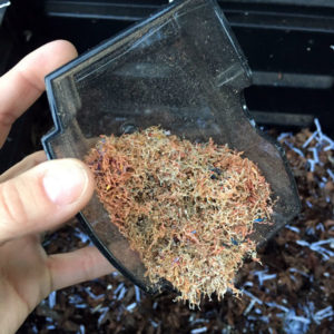 pencil sharpener shavings ready for the compost