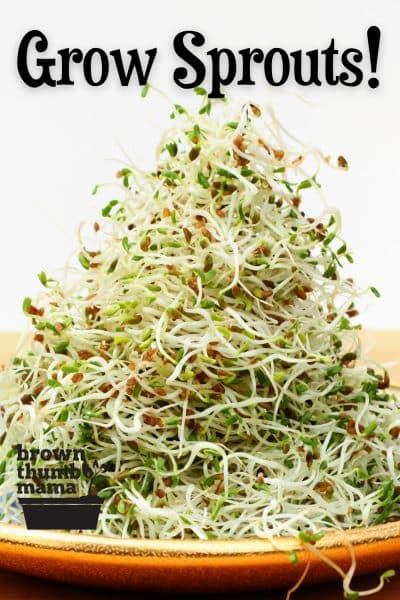 grow sprouts tile