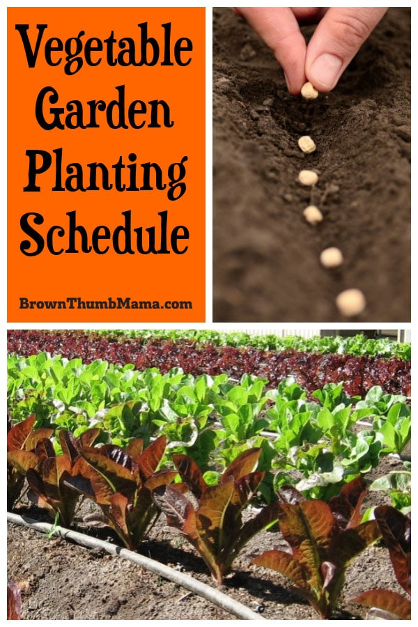 Plant your vegetable seeds and starts at exactly the right time with a vegetable garden planting schedule. These planting charts are customized by zone, so you don't waste any more time and money planting vegetables at the wrong time for your area and climate.