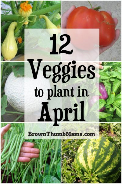 Plant these 12 vegetables in April for an amazing harvest this summer. Includes planting tips and recommended varieties.