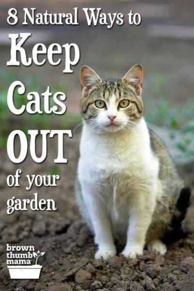 cat sitting on garden soil