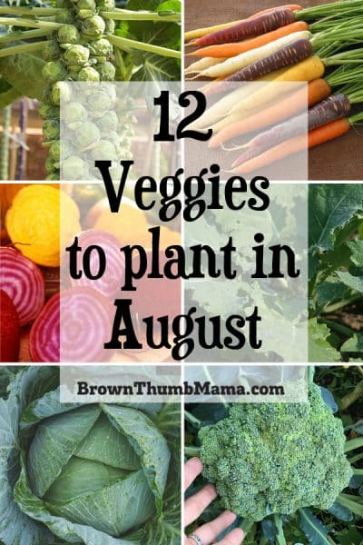 12 Vegetables To Plant In August Zone 9: 12 Vegetables To Plant In August {Zone 9} • Brown Thumb Mama®
