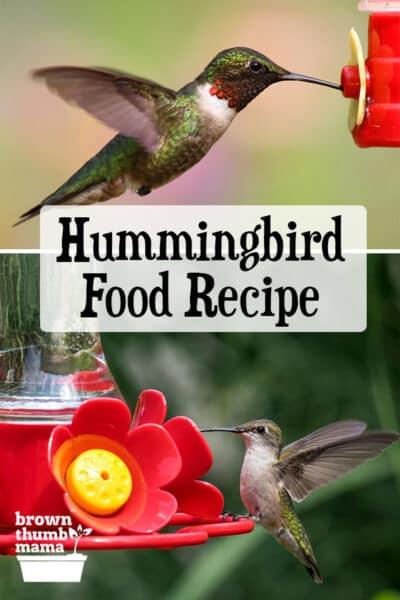 hummingbirds drinking from feeders