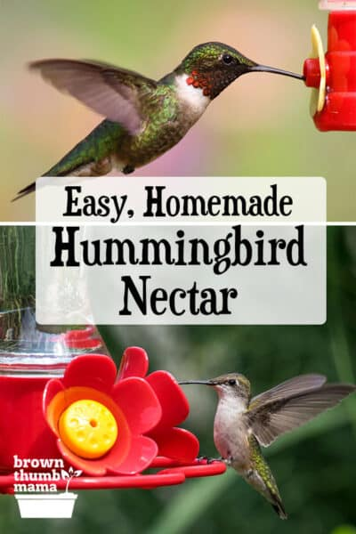 Hummingbird Food Recipe | Brown Thumb Mama®