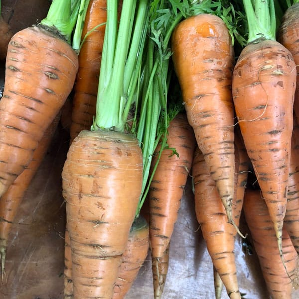 You might think that it's too cold to garden—but it's not! There are lots of tasty vegetables you can plant in October. #gardening #organicgardening #growyourown