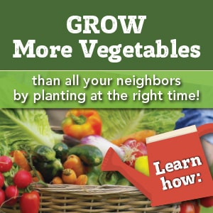 Grow more vegetables than all your neighbors with a custom vegetable planting schedule.
