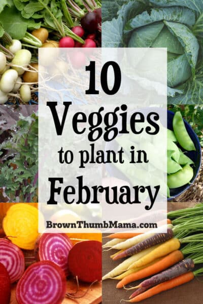 Brrr! It's cold outside, but these veggies are up to the task. Plant these 10 vegetables in February and you'll enjoy fresh food from your garden in no time!