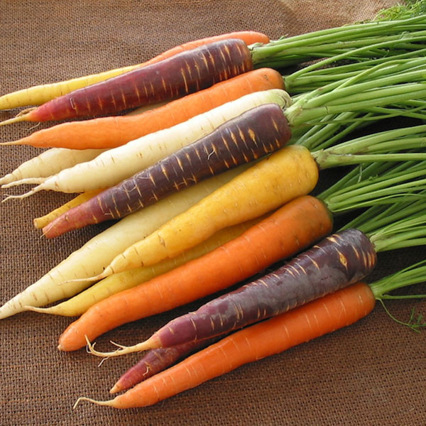 purple, yellow, white, orange carrots on burlap