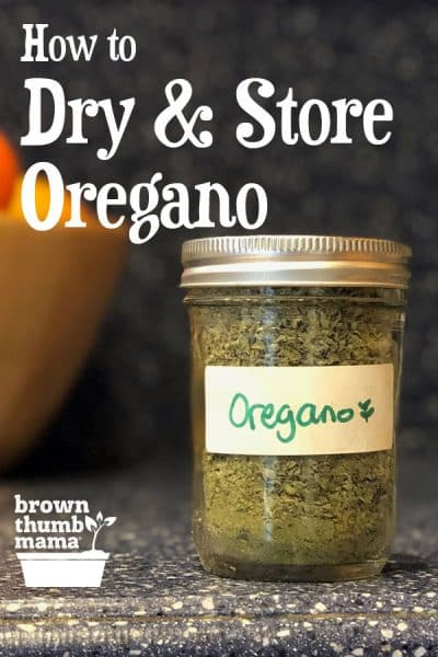 It's easy to dry oregano from your garden. Once you've dehydrated oregano, you can add its delicious flavor to your spaghetti sauce, meatballs, soups, and more.