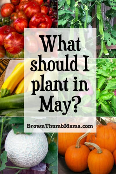 vegetables to plant in May