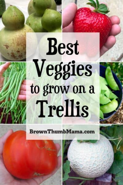 best vegetables to grow on a trellis