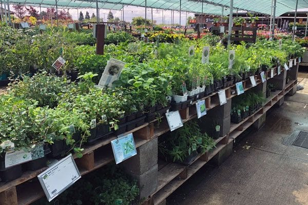 rows of herbs at the garden center