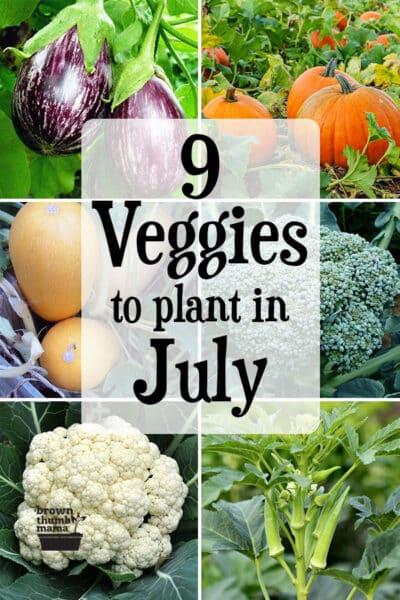 vegetables growing in garden