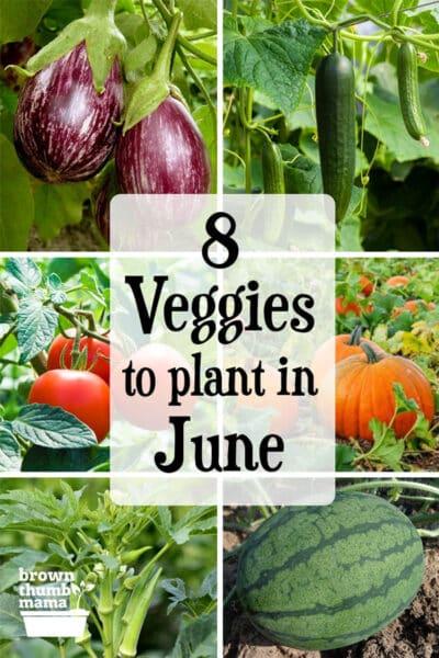 eggplant, cucumber, tomato, pumpkin, okra, watermelon