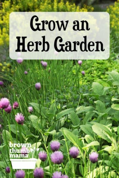 herbs growing in garden