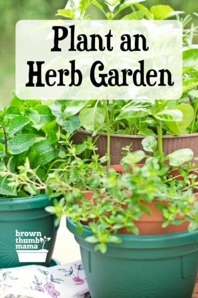 assorted herbs growing in pots