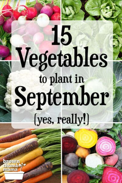radish, lettuce, cauliflower, cabbage, beets, carrots