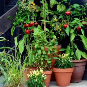 container garden vegetables