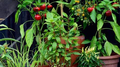 container garden vegetables