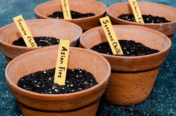 terra cotta pots with soil