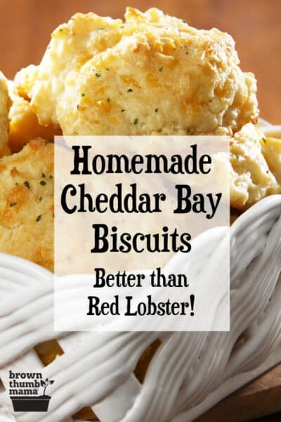 savory copycat Red Lobster Cheddar Bay biscuits