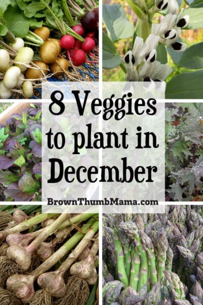 vegetables to plant in December