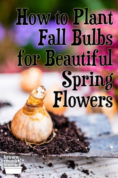 tulips, hyacinths, crocus