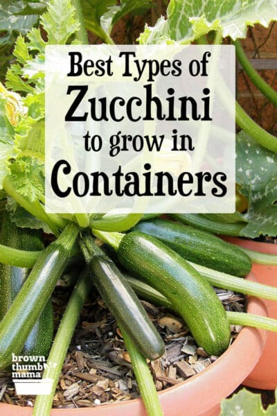 Best Types of Zucchini to Grow in Containers