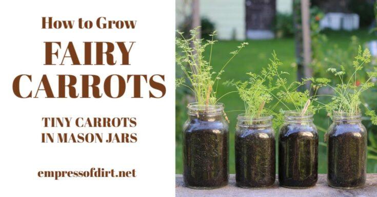Grow Fairy Carrots