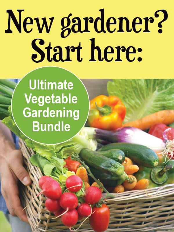freshly picked vegetables in basket