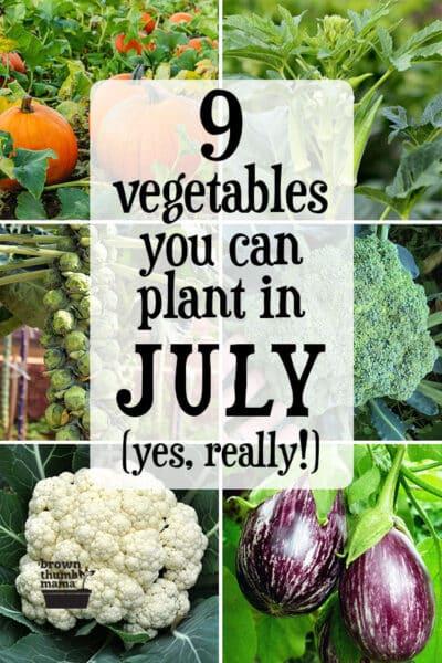 vegetables planted in garden