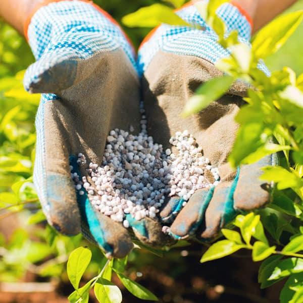 gloved hands holding fertilizer pellets