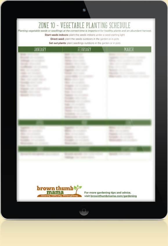 Zone 10 Vegetable Schedule