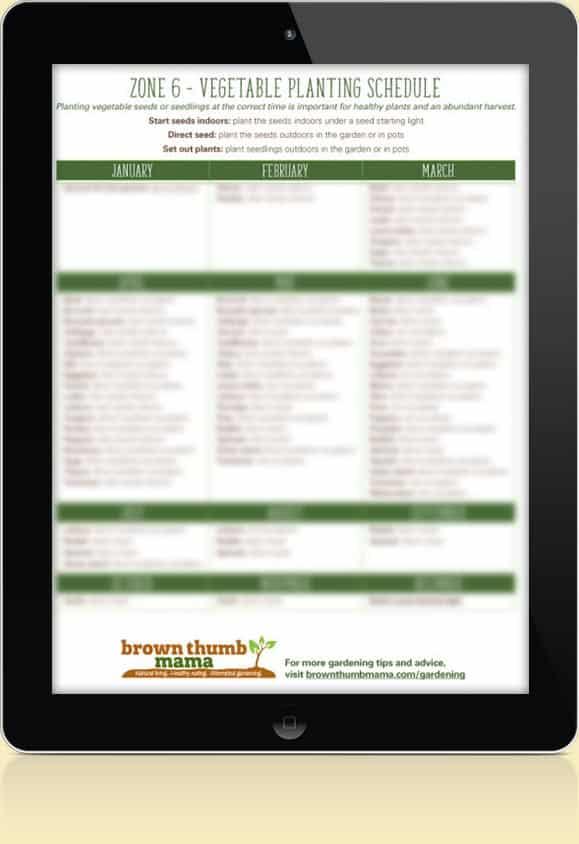 Zone 6 Vegetable Schedule