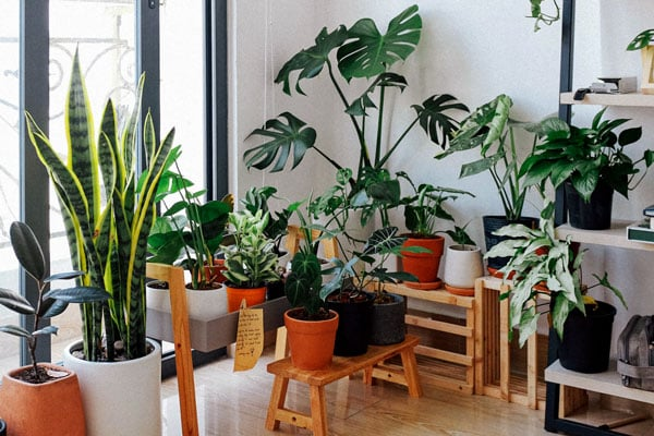 room full of house plants