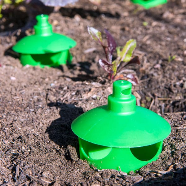 slug and snail traps in soil