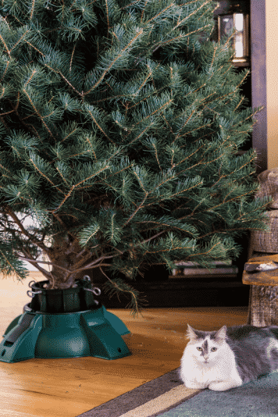 christmas tree no decorations and cat sitting on floor