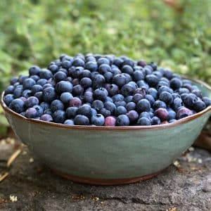 fresh blueberries in stoneware bowl