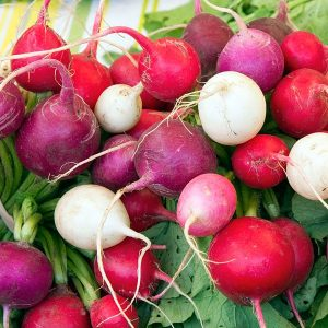 colorful radishes with greens