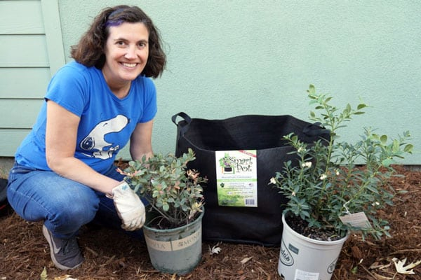 woman kneeling with smart pot and blueberry bushes