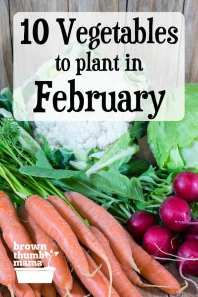 carrot, radish, cauliflower on table