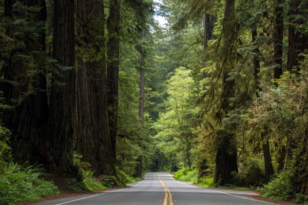highway through towering redwoods