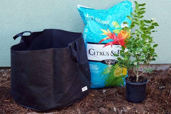 Smart Pot, lime tree, bag of soil
