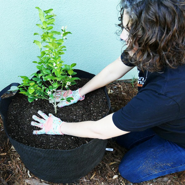 woman patting soil around freshly potted tree
