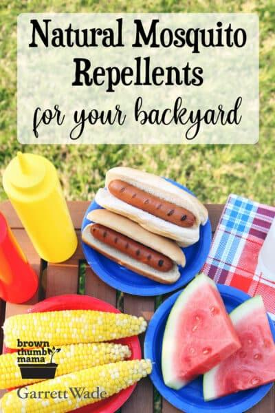 food at backyard picnic